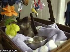 I cannot get over how freaking cute this is!... Batmobile! - Imgur    ( click on pin to get to video)