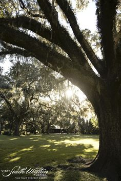 Eden Gardens State Park in Santa Rosa Beach, Florida is a must see while you're in South Walton! The 600+ year old moss-draped live oaks and impeccable gardens will simply take your breath away!