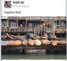 Seals!!!! PIER 39 in beautiful San Francisco!!!!