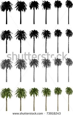 palm vector - Google Search