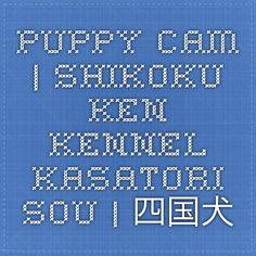 Puppy cam   Shikoku Ken kennel Kasatori Sou   四国犬