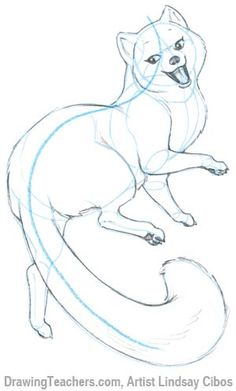 How to Draw a Cartoon Fox Step 6