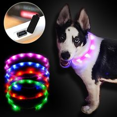 USB Rechargeable Glowing LED Collar for Dogs & Cats - Yuval'sMart Shopping. Now you can see you dog's whereabouts even at night – available in various colors & sizes.  #dog #collar #yuvalsmart