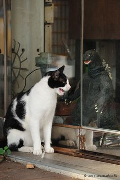 AHHHH! It's Godzilla!! Hide the kittens, Ma!!! Need dogs running around with cameras. ... Funny Cats, Cute Cats, I Love Cats, Crazy Cats, Godzilla Godzilla, Animals And Pets, Funny Animals, Cute Animals, Animals Images