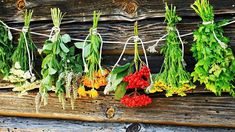 drying herbs results - ImageSearch Are Essential Oils Safe, Organic Essential Oils, Floral Bath, Bath Tea, Peppermint Leaves, Home Spa, Spa Gifts, Drying Herbs, Lavender Flowers
