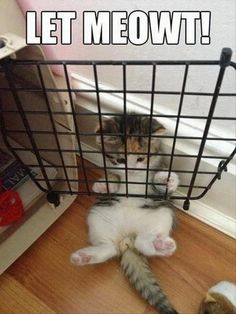 Awe poor kitty cat #lockedup #kitten #cage