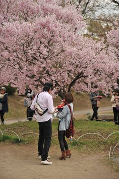 Photos of the celebration of the Sakura flowers in Suwa - Takashima Castle