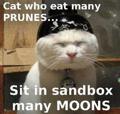 Wise words from wise CAT