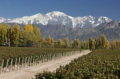 Mendoza To learn more about #Mendoza click here: http://www.greatwinecapitals.com/capitals/mendoza