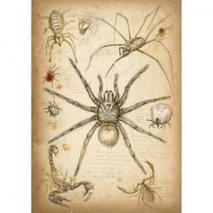 Arachnides. Nature, journal, sketchbook, notebook, dairy, words and images, drawing.