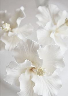 neutrals.quenalbertini: Beautiful neutral flowers | Mona Mina