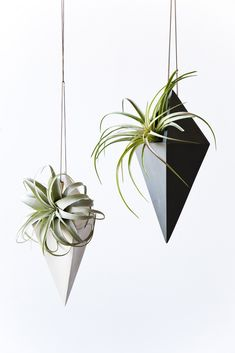geometric hanging air plants to create divide bw reception and small mtg space