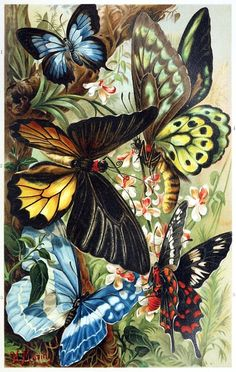 oldbookillustrations:    Exotic butterflies.  From Brehms Tierleben (Brehm's animal life) vol. 9, by Alfred Edmund Brehm, Leipzig, Vienna, 1893.  (Source: archive.org)