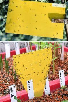 Garden Bugs, Garden Pests, Indoor Garden, Indoor Plants, Plant Pests, Organic Gardening, Gardening Tips, Plant Growth, Plantar