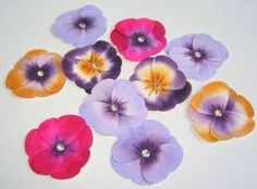 Retiring: Butterfly Punch Pansies