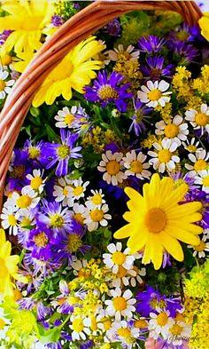 Photo Purple, Plants, Flower Ideas, Yellow, Honey, Miniatures, Yard, Sun, Flowers