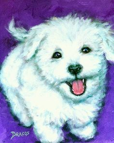 Bichon Frise Puppy Art Print.  Cute!
