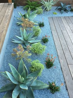 Front Yard Landscaping Ideas - Check Out these Perry House Decor pictures of front backyard landscape design layouts and also obtain ideas for your personal yard. Succulent Landscaping, Succulent Gardening, Front Yard Landscaping, Planting Succulents, Backyard Landscaping, Landscaping Ideas, Growing Succulents, Succulent Plants, Modern Landscaping