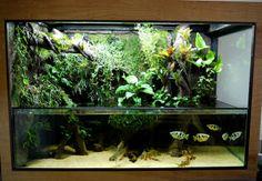 300 gal vivarium with sump. has fog and a waterfall, link has video scroll down Terrariums, Fish Tank Terrarium, Aquarium Terrarium, Reptile Terrarium, Planted Aquarium, Aquarium Fish, Vivarium, Paludarium, Aquascaping