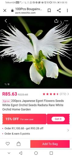 Orchid Seeds, White Egret, White Orchids, Fruit Trees, Bonsai, Home And Garden, How To Get, Flowers, Plants