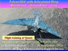 with Swept Articulated Wing :Flight Training at Oosato Flight by KK, FO, YS This ornithopter has larger wings. Robot Bird, Wings, Train, Youtube, Feathers, Feather, Strollers, Youtubers, Ali