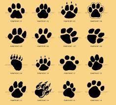Resultado de imagem para designs of cats feet
