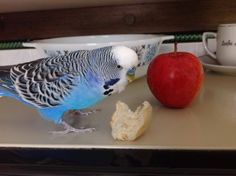 """""""Snack for me, yay"""" ay https://www.facebook.com/MerlinTheBird/photos/a.671898279492243.1073741824.111070665575010/965250093490392/?type=1"""