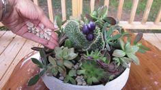 DIY Succulent Garden, how-to, making your own succulent garden, decorative gravel