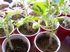 What to consider when hardening off seedlings, and the simple way to do it.
