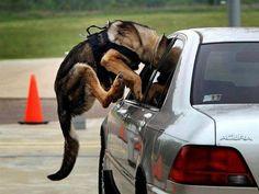 POLICE DOG                                                                                                                                                                                 Más