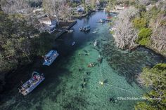 Manatees at Crystal River, Three Sisters Spring, Florida. Over the past 50 years the springs and the vast network of canals that connect the springs to the ocean have been overtaken by waterfront properties, golf courses and condos. Rio, Manatee Florida, Florida Springs, Crystal River, National Geographic Society, Waterfront Property, Florida Vacation, North America, Photo Galleries