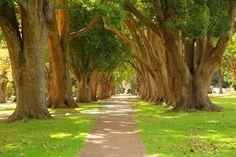 Walking path through Queens Park Toowoomba