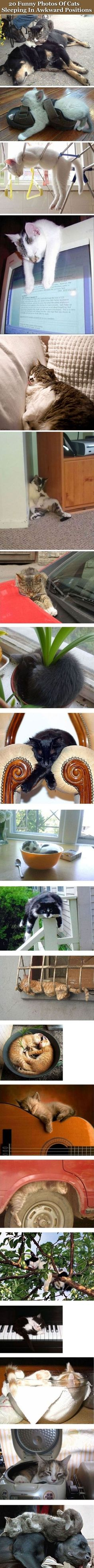 20 Funny Photos Of Cats Sleeping In Awkward Positions cute animals cat cats…