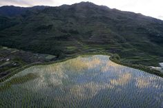 A view of a rice paddy along the mountain slopes of Banaue city, Ifugao province, north of Manila, on April 16, 2008.