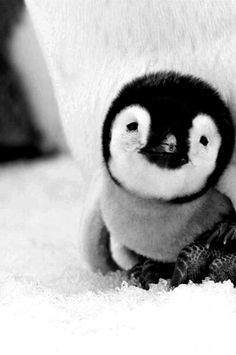 Cute Penguin...... awwwwww
