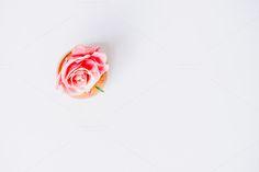 Rose Gold Vase I Styled Stock by ImagineYou on @creativemarket #feminine #stockphotography #styledstock #blogging #bloggingresources #resources #creativemarket #stock