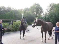 Dressage Stars: What do you think Valegro is saying to his dad Negro?...