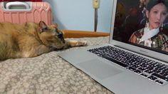 She's learning to watch Zhenhuan Story...
