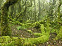 Garajonay National Park, La Gomera, Canary Islands