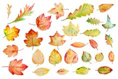 Watercolor Autumn Leaves Clipart by Corner Croft on Creative Market