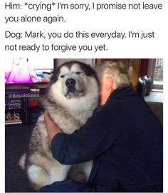 You've broken my trust human. @betasalmon #trust #faith #relationships #forgive #dogsofinstagram #dogstagram #dogsofig #dogsofinsta #doglover #dog