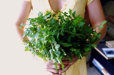 Parsley is an extremely versatile and powerful herb. Each part of this plant (leaf, seed and root) is used to treat a variety of ailments.     - Has a very high vitamin C content.  Also contains vitamin A, B1, B2, Calcium, Iron, and anti-inflammatory flavonoids.   - Stimulates blood flow in the pelvic area and uterus. Parsley seeds can be used as a tea to eliminate menstrual problems.   - Some herbalists recommend parsley as a natural remedy for fever.