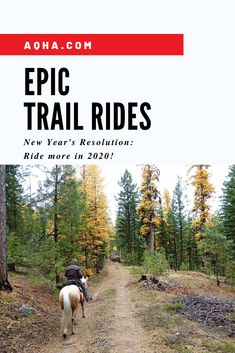 Ready to hit the trail? Whether it's snowing or warm and sunny where you are, it's always a good time to ride. Check out these bucket-list worthy trail rides! It's time to start planning your adventures! Horseback Riding Trails, Trail Riding Horses, Horse Riding, Horse Training Tips, Horse Tips, Horse Barns, Horse Stalls, Horse Horse, George Morris