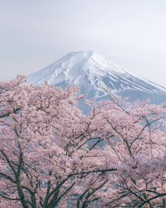. Spring in Japan . 富士山と桜 . Yamanashi / Japan . .  #TheWeekOnInstagram #instagramjapan @artofvisuals #artofvisuals #visualoflife…