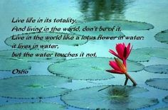 Osho quote - live life in its totality