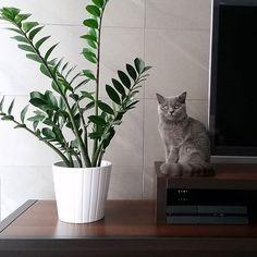 Zamioculcas Zamiifolia and other low maintenance houseplants
