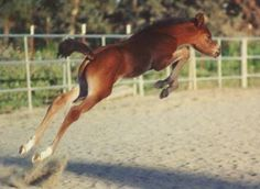 Flying foal!