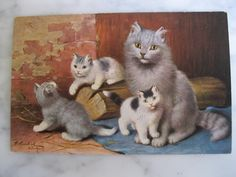 Antique Postcard. From my album Cats and Kittens. Signed Sperlich.1910 era by grandma62 on Etsy