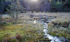Erlebnisweg Moorwald Bad Leonfelden Heart Of Europe, Mountains, Nature, Travel, Road Trip Destinations, Woodland Forest, Vacation, Viajes, Naturaleza