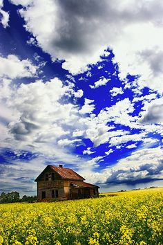 Abandoned Farmhouse In A Canola Field